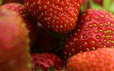 El experto en marketing David Martínez Roig dará claves para mejorar la experiencia de compra de frutos rojos en el Congreso de Huelva